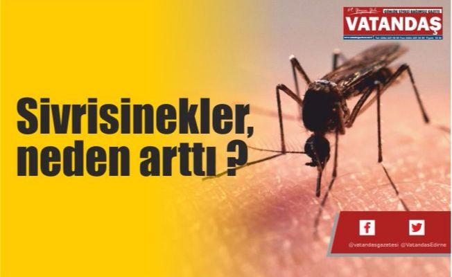 Sivrisinekler,  neden arttı ?
