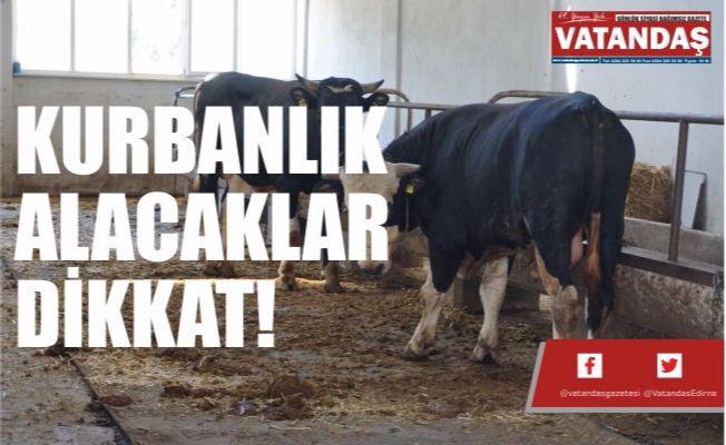 KURBANLIK ALACAKLAR DİKKAT!