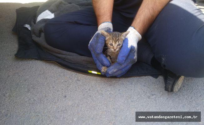 Yavru kedi kurtarıldı