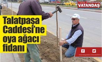 Talatpaşa Caddesi'ne  oya ağacı fidanı